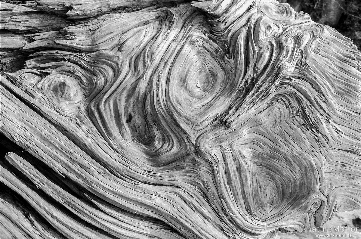 Wurzel, Holzmaserung, Wanderung GR 20, Korsika, Frankreich